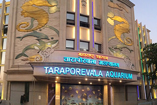 Taraporewala-Aquarium-thumb